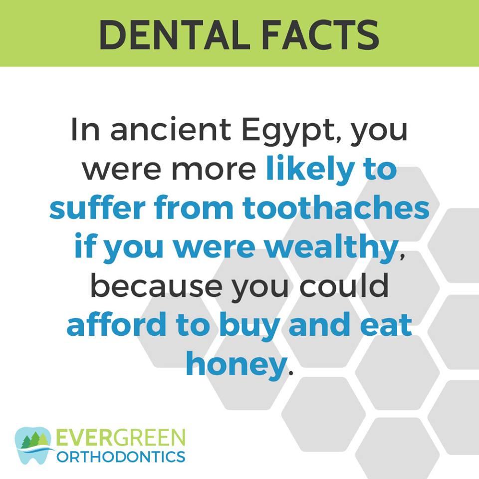 egypt-honey-wealth