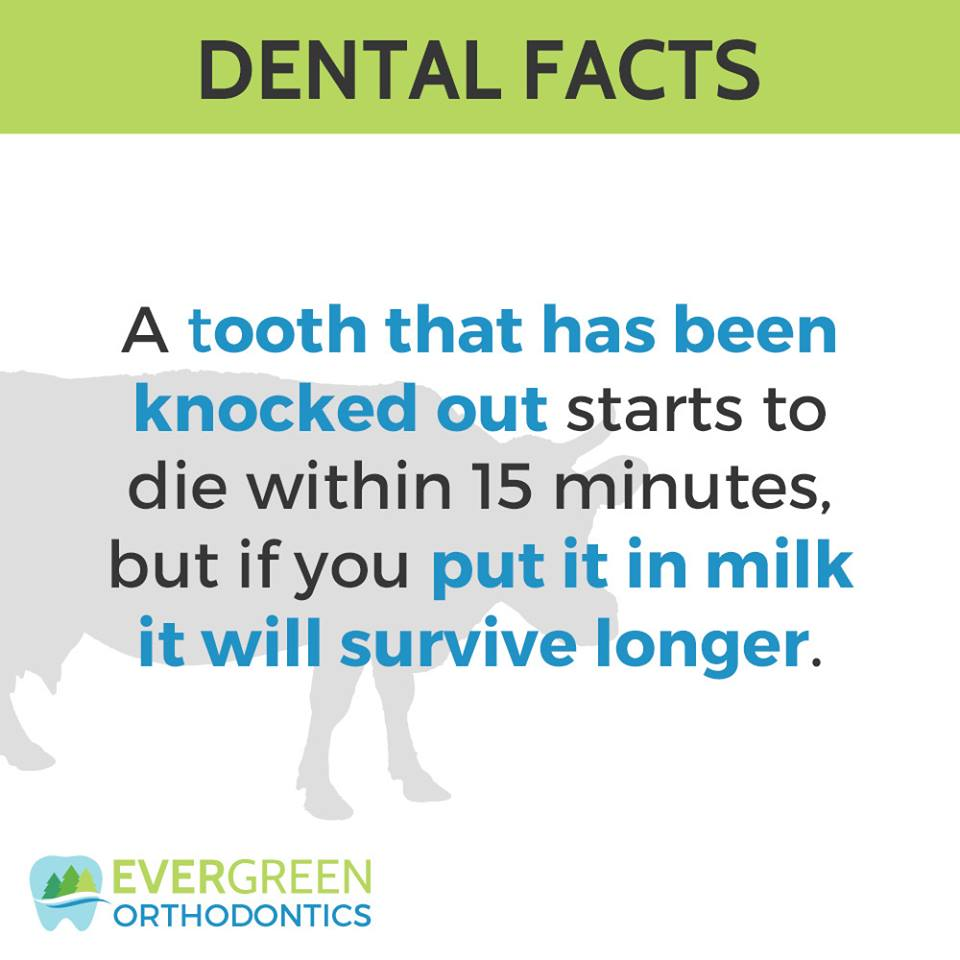 tooth-fact