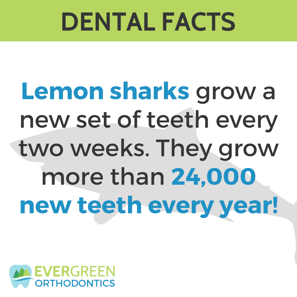 Dental-Facts-lemon-shark